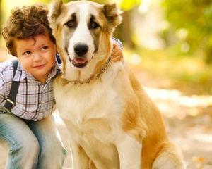 Dog and Boy - Pet Sitting